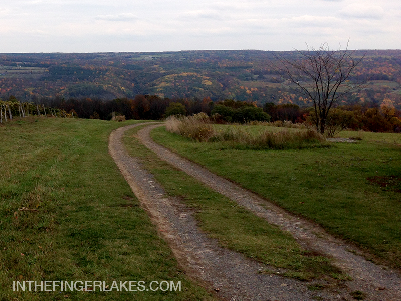 Farm Road in a Vineyard on The Bluff - In The Finger Lakes