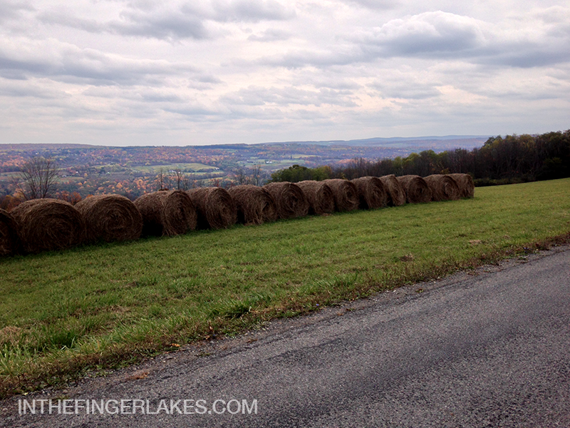 Hay Bales - Farm Road in a Vineyard on The Bluff - In The Finger Lakes